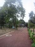 府立植物園:バクチノキ.jpg